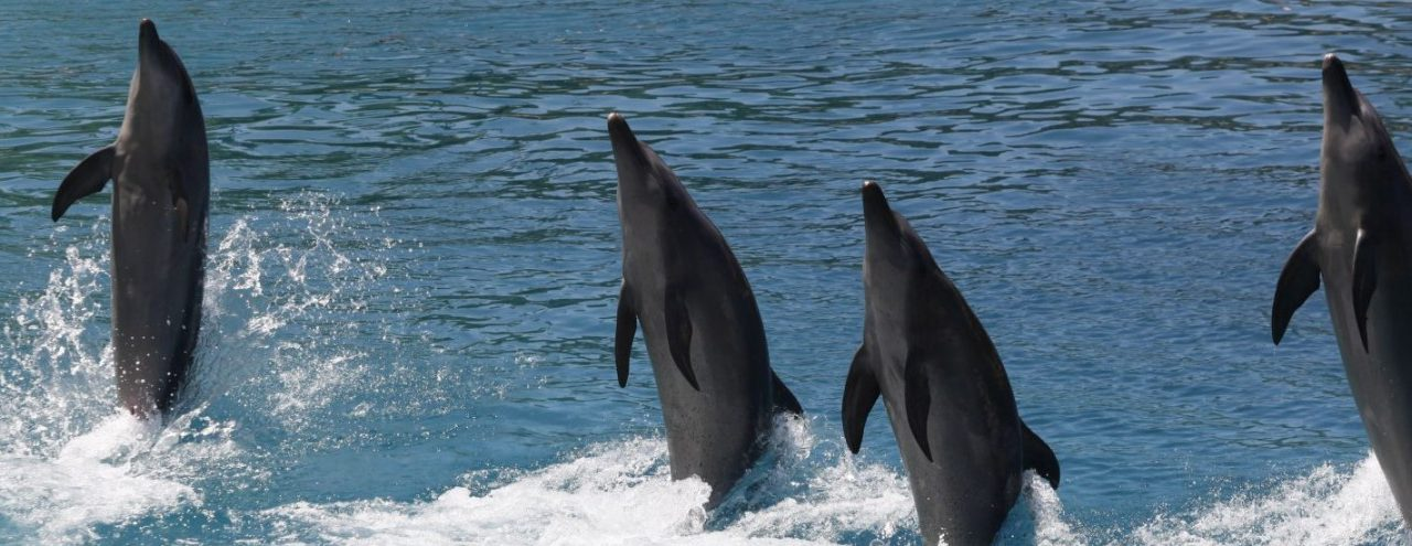 Calling for a Ban on Captive Dolphin Breeding at Sea World