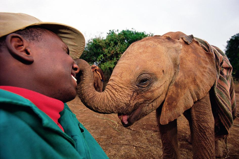 Yes, Animals Think and Feel. Here's How We Know