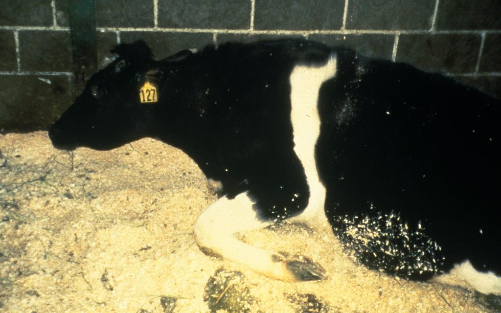 From Mad Cow Disease to Agrochemicals: Time to Put Public Need Ahead of Private Greed