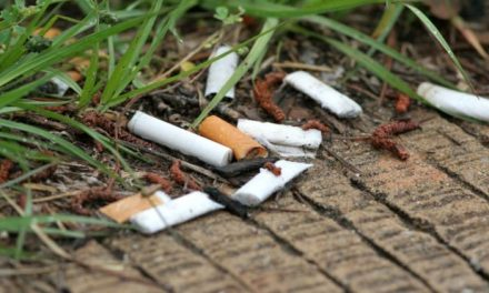 Cigarette Butts in Soil Hamper Plant Growth, Study Suggests