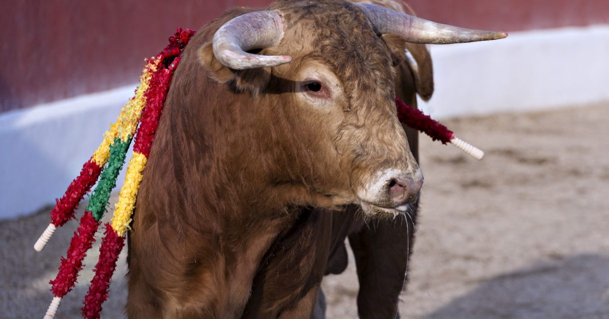 Spain's Cruel Bullfights Have No Place in the 21st Century