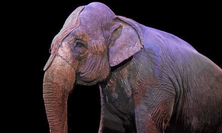 UK Finally Bans Wild Animal Circuses After 20 Years of Protests