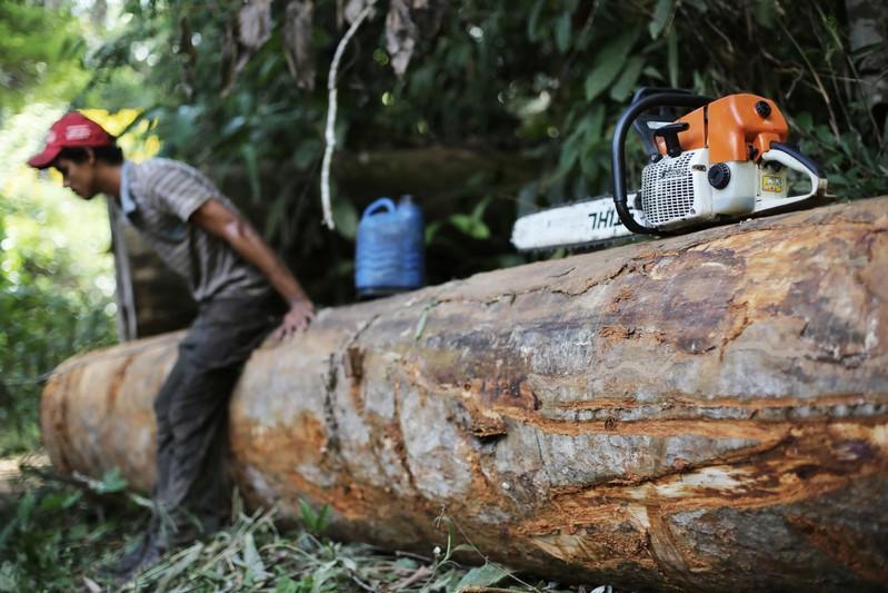 Brazil Deforestation Exceeds 88% in June Under Bolsonaro