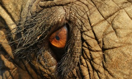 Bearing Witness: The Animal Dialogues