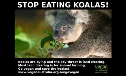 Animal Agriculture Is Major Threat to Koalas