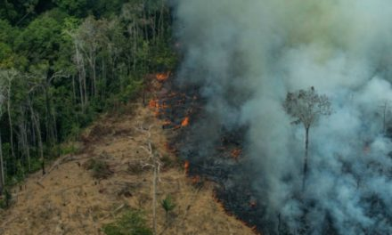 "Indigenous Tribes on Front Line of Amazon Rainforest Fires Vow to Resist Bolsonaro's ""Destruction of Mother Nature"""