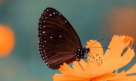 Faunalytics Index – August 2019