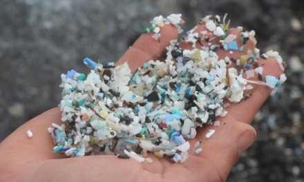 Something Fishy: Toxic Plastic Pollution Is Traveling Up the Food Chain