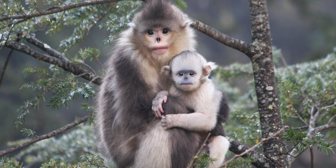 Is Science Failing the World's Primates?