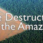 The Destruction of the Amazon Rainforest | George Monbiot