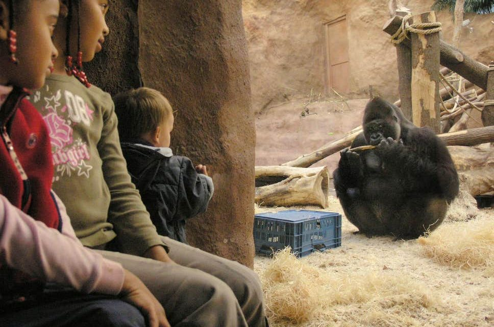 Zoos Are Outdated and Cruel – It's Time to Make Them a Thing of the Past