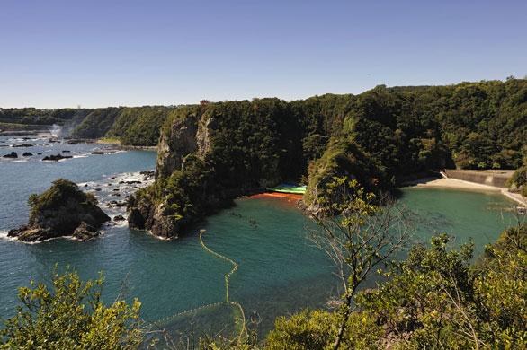 Cruel Taiji Dolphin Drive Hunt Season Underway
