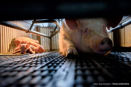 Thoughts About Diluting the Animal Rights Message