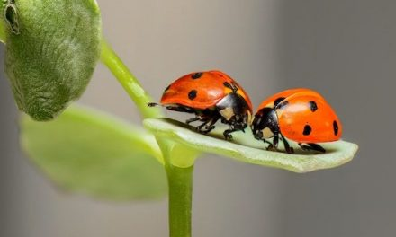The Insect Apocalypse Is Coming: Here Are Five Lessons We Must Learn