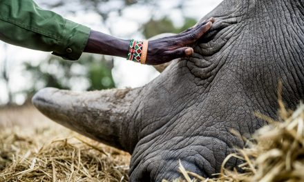 What Guarding Rare Rhinos Says About Saving the Planet