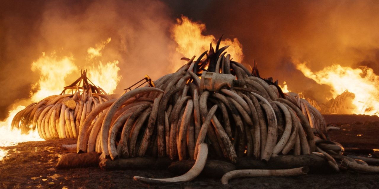 The Scariest Horror Movie of the Year Is an Environmental Documentary