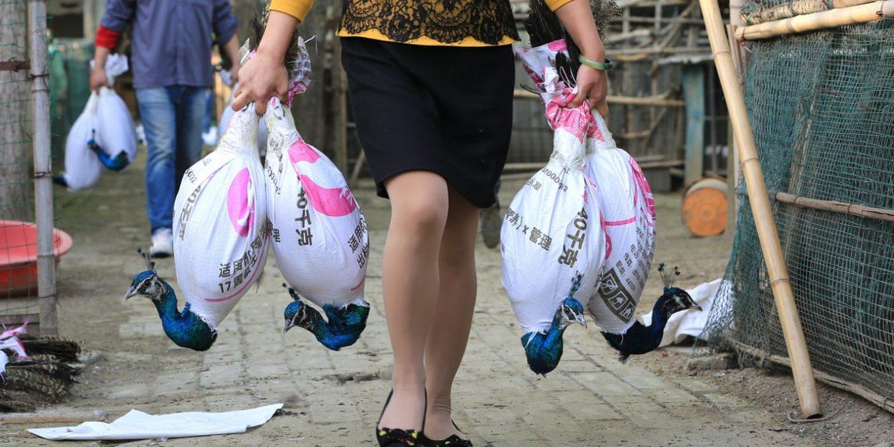 Coronavirus Closures Reveal Vast Scale of China's Secretive Wildlife Farm Industry