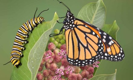 Ode to the Monarch Butterfly
