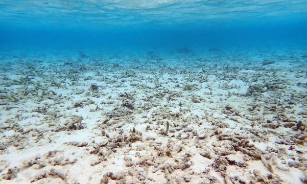 The Coming Ecosystem Collapse Is Already Here for Coral