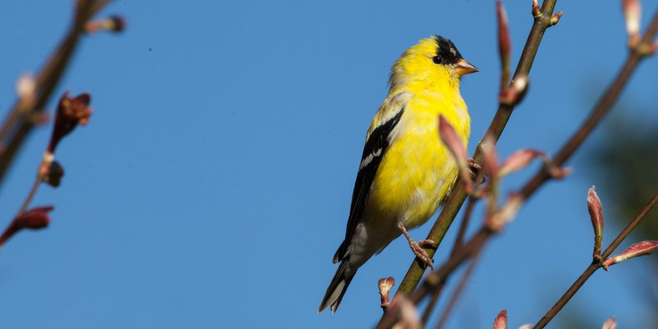 Now's a Great Time to Become a Backyard Naturalist — Here's How