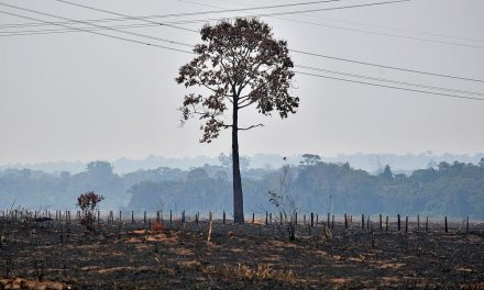Amazon Rainforest Hit By Killer Droughts