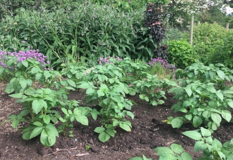 How to Make a Veganic No-Dig Garden