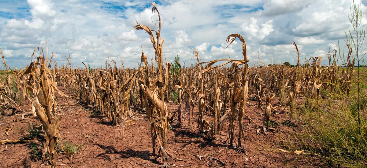 Drought Clobbers the World